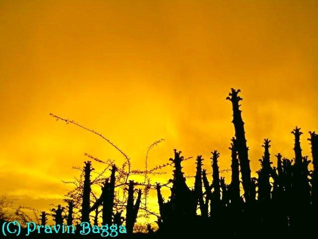 Golden evening by Pravin Bagga