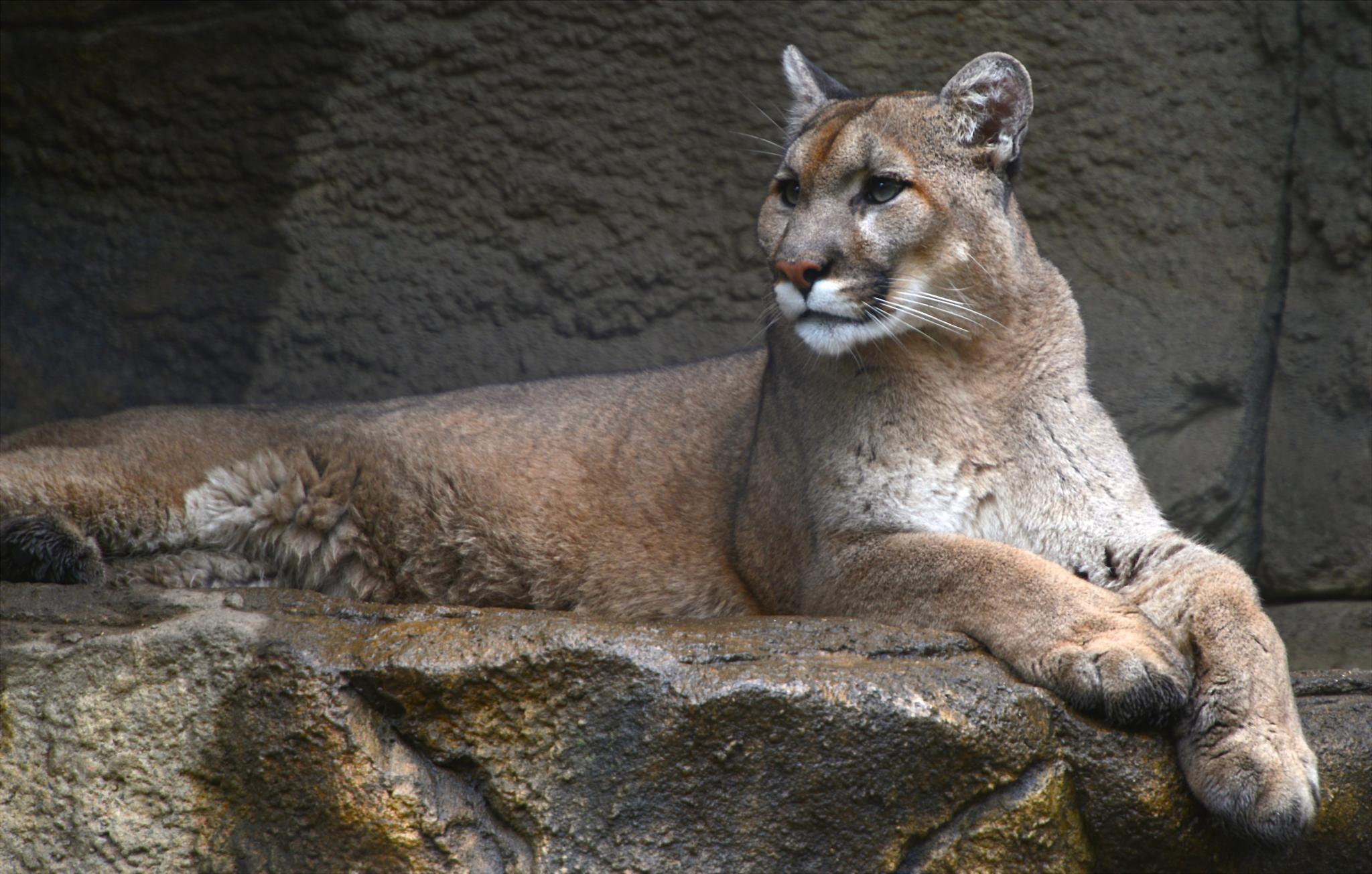 Puma by liv
