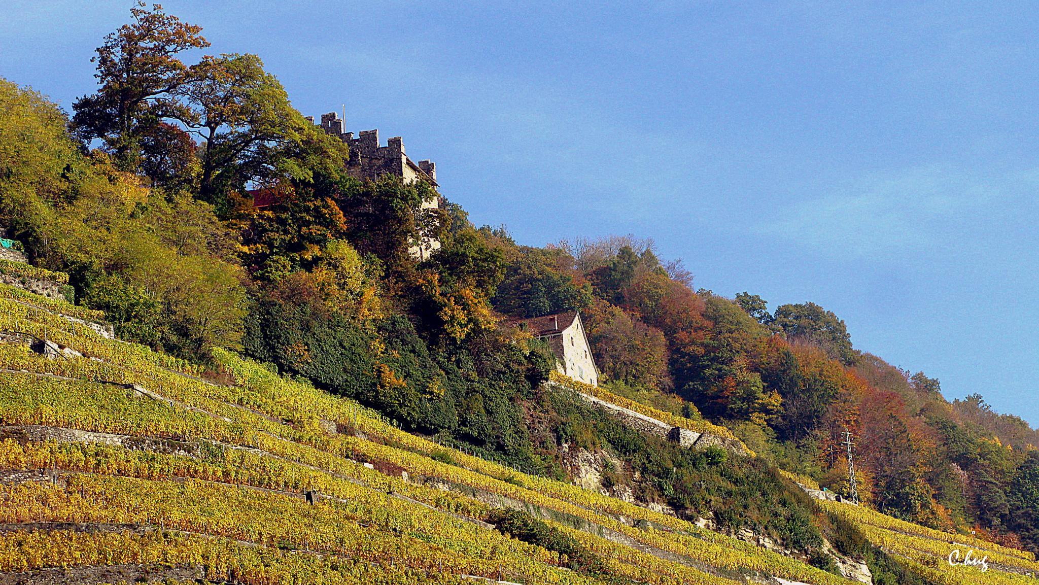Lavaux - Vignoble en terrasses by Huguenin Claude