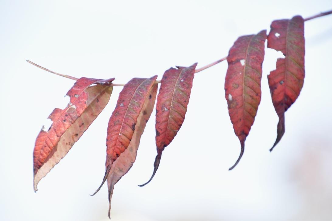 Autumn by Marisa Bonacum