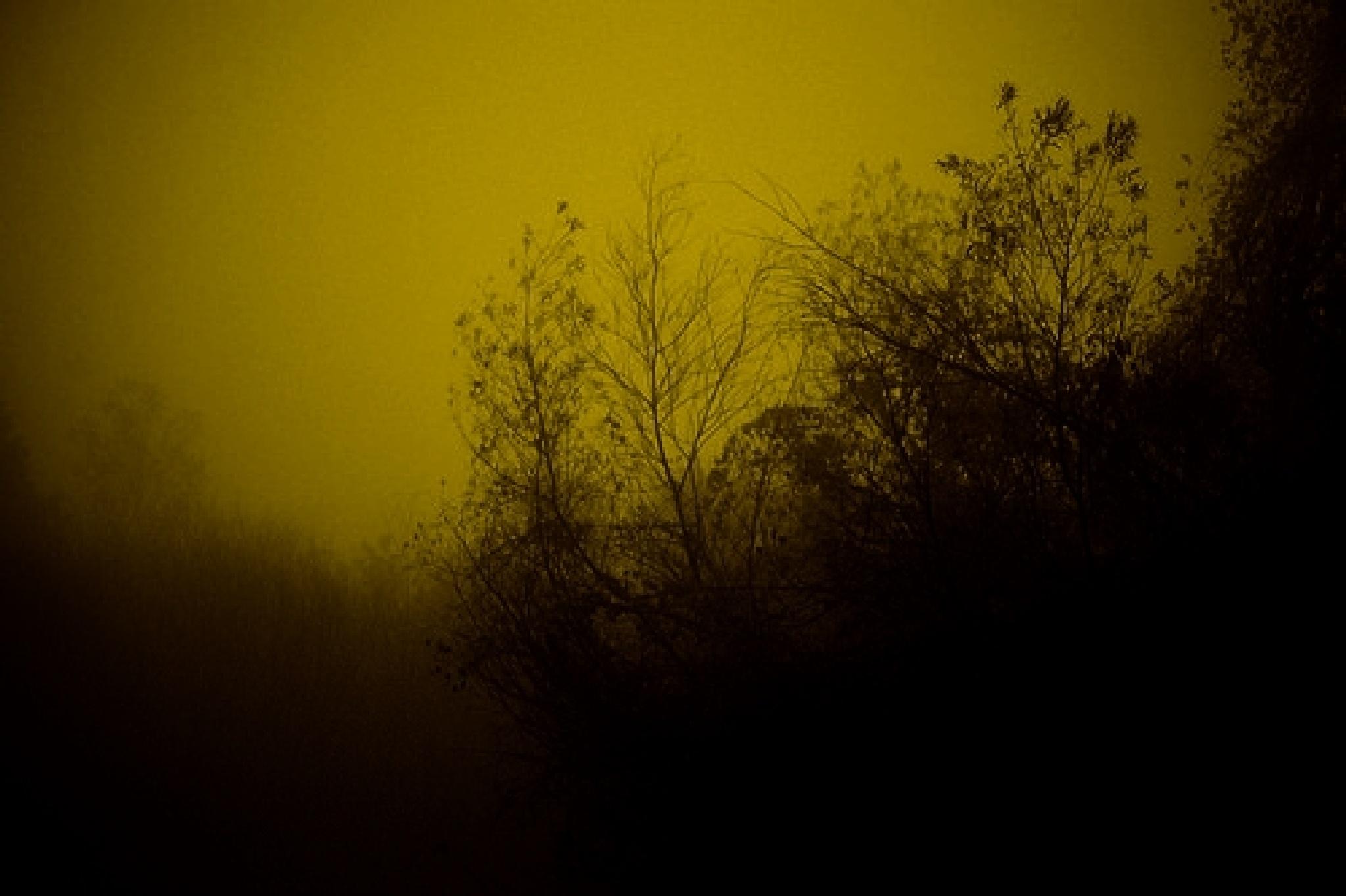 the fog by Marisa Bonacum