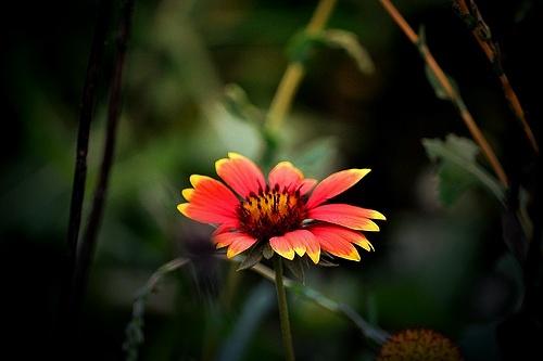 beauty by Marisa Bonacum