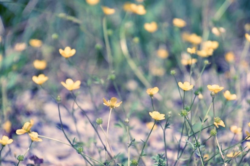 Nature Preserve by Marisa Bonacum