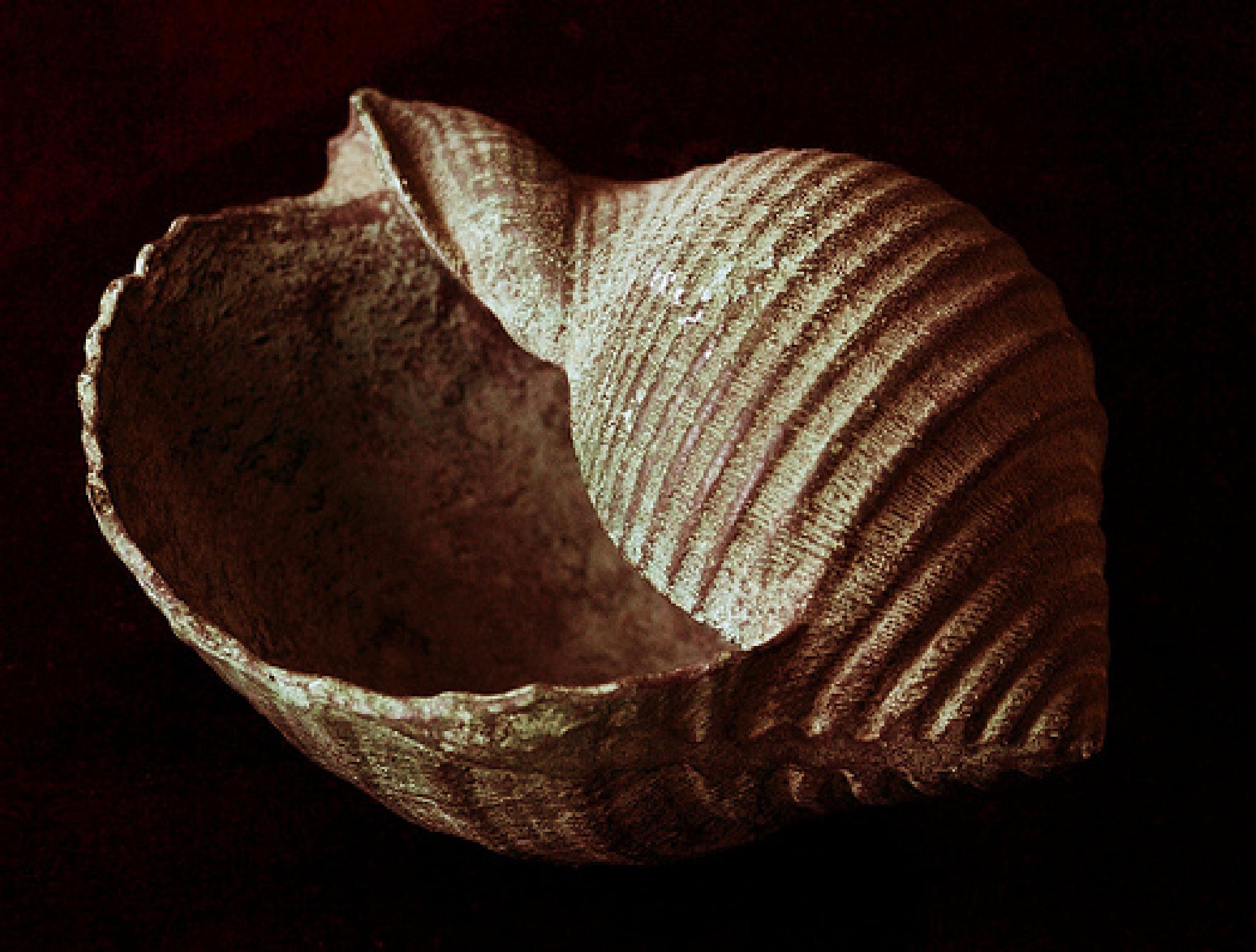 metal shell by Marisa Bonacum