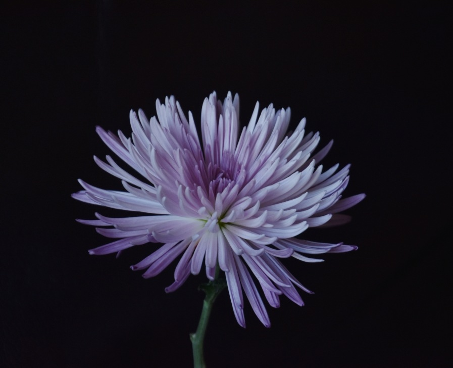 purple beauty by Marisa Bonacum