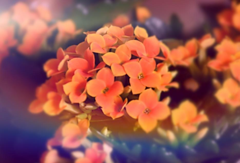 dainty flowers by Marisa Bonacum