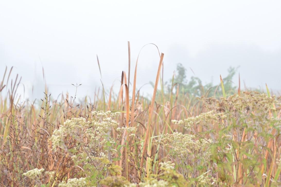 Overgrown by Marisa Bonacum