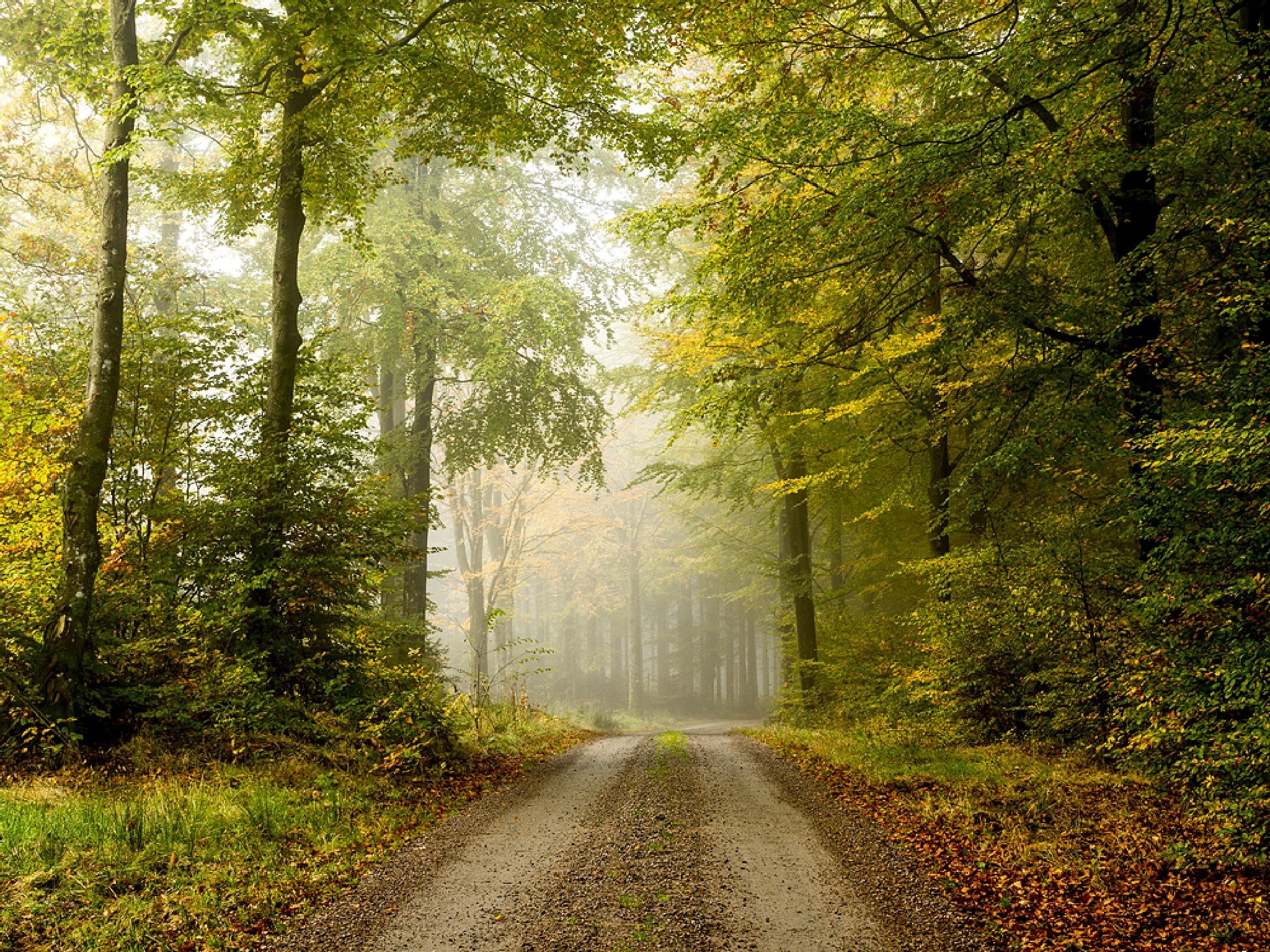 The road by Peter Samuelsson