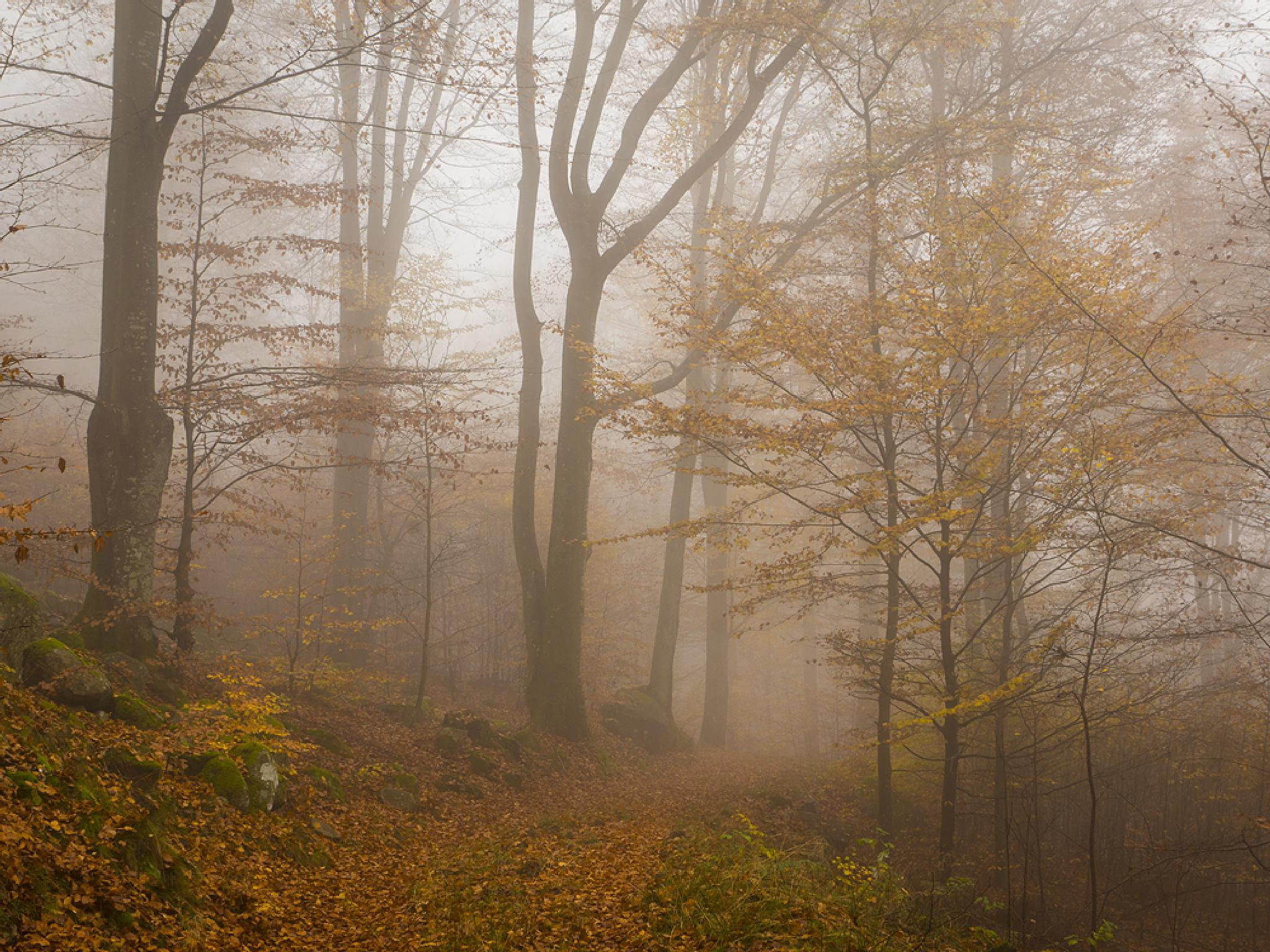 Dreamy forest by Peter Samuelsson