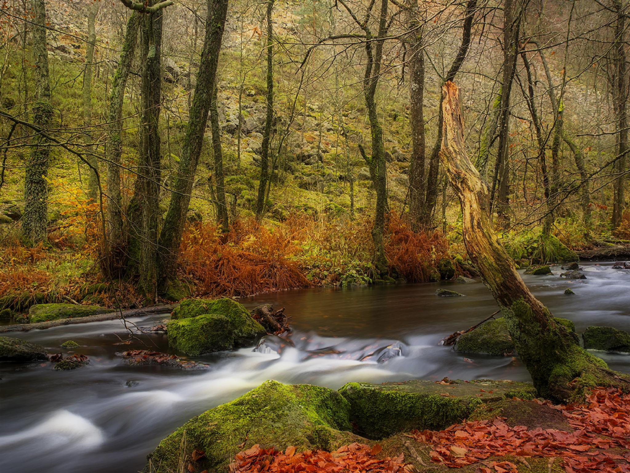 Creek by Peter Samuelsson