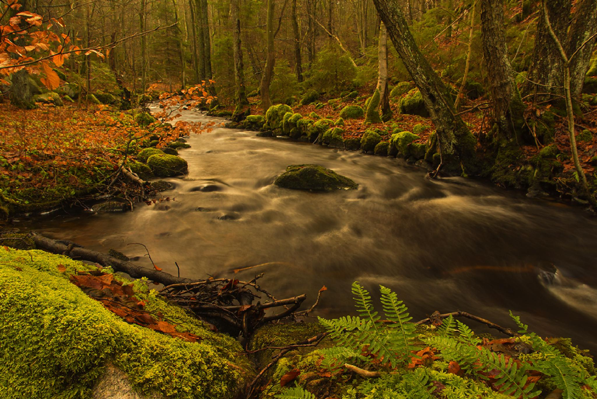 The creek by Peter Samuelsson