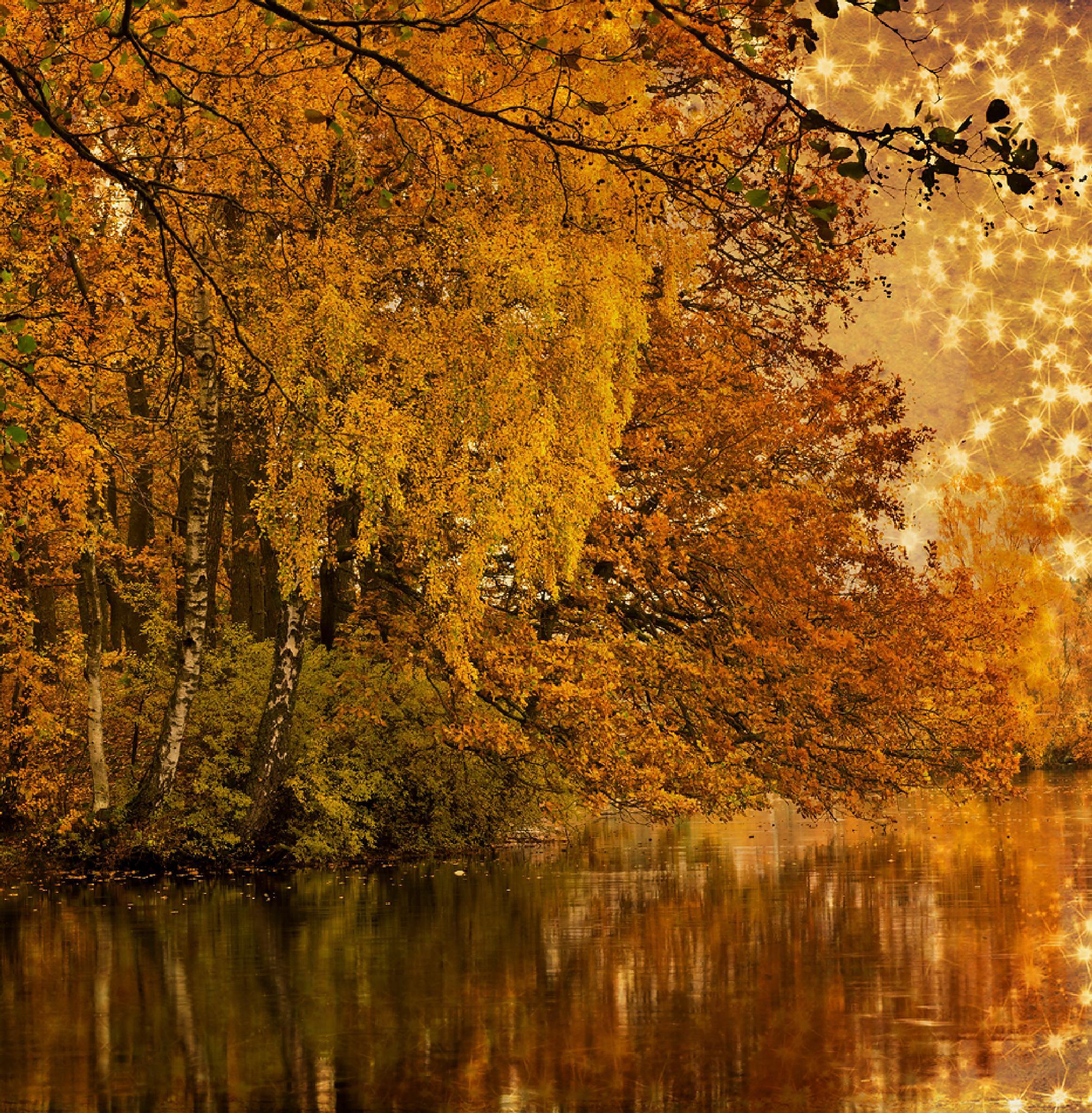 Golden autumn by Peter Samuelsson