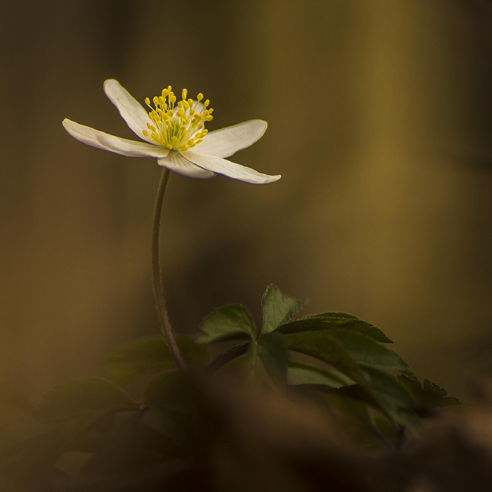 Alone in the dark by Peter Samuelsson