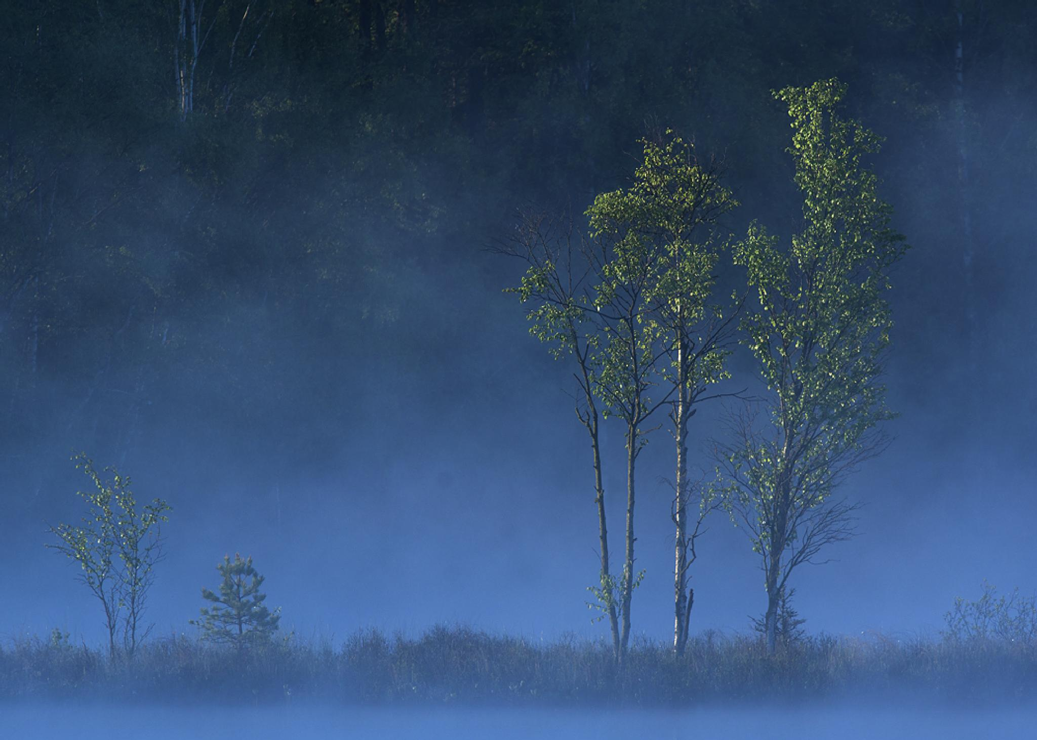 Early morning by Peter Samuelsson