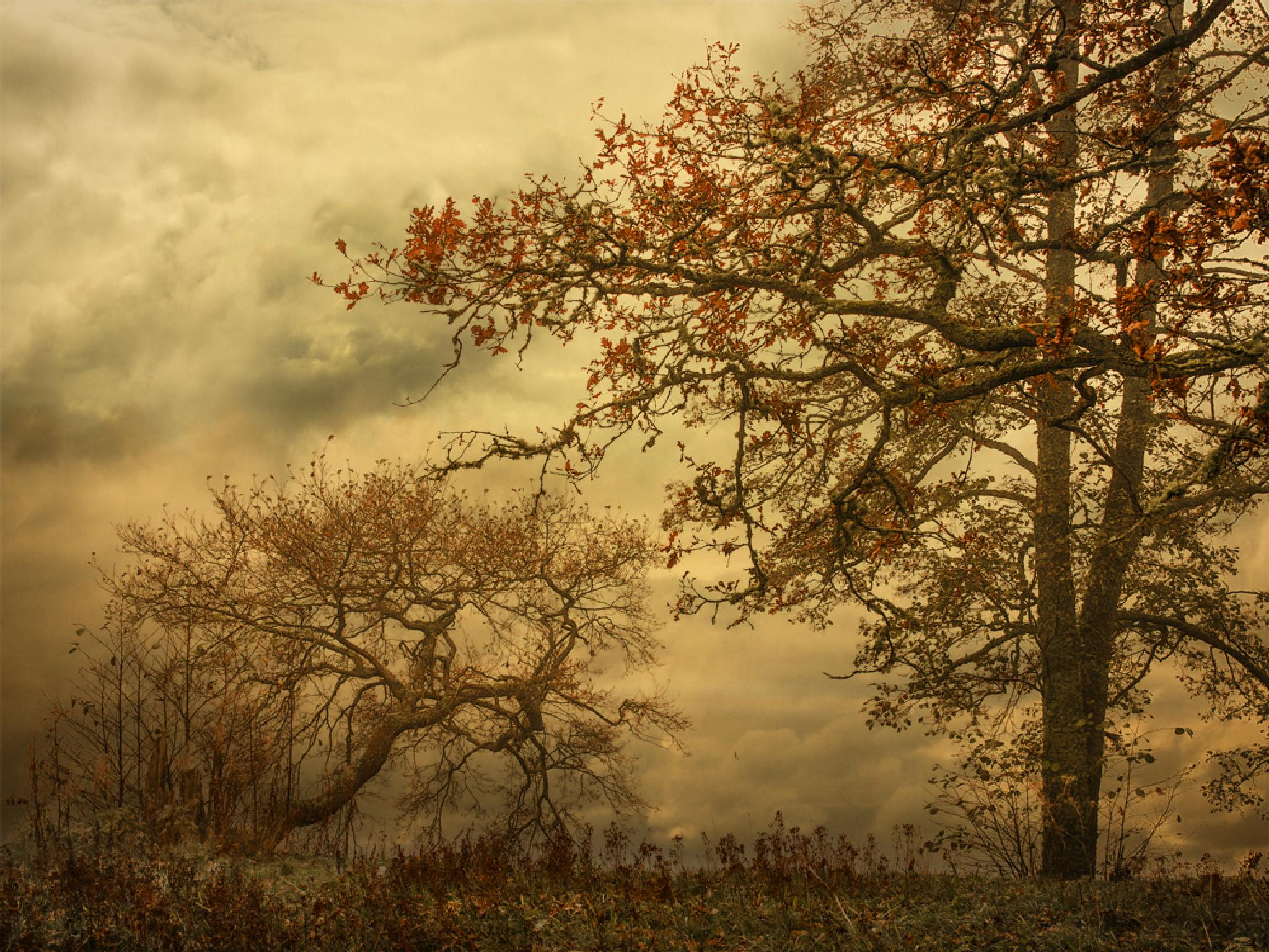 Trees by Peter Samuelsson