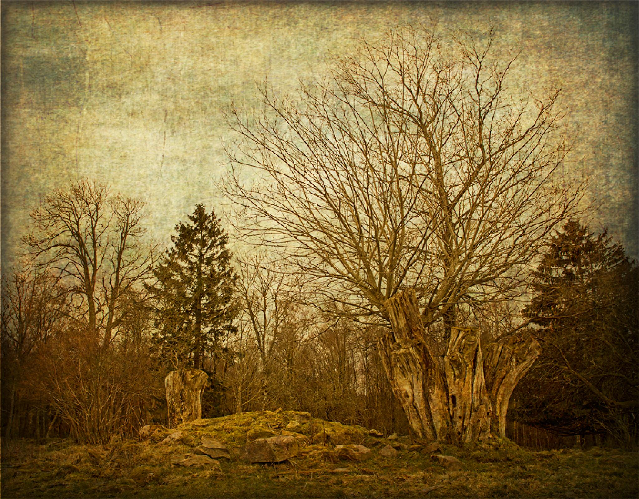 Photo in Nature #sweden #halland #nature #trees #texture