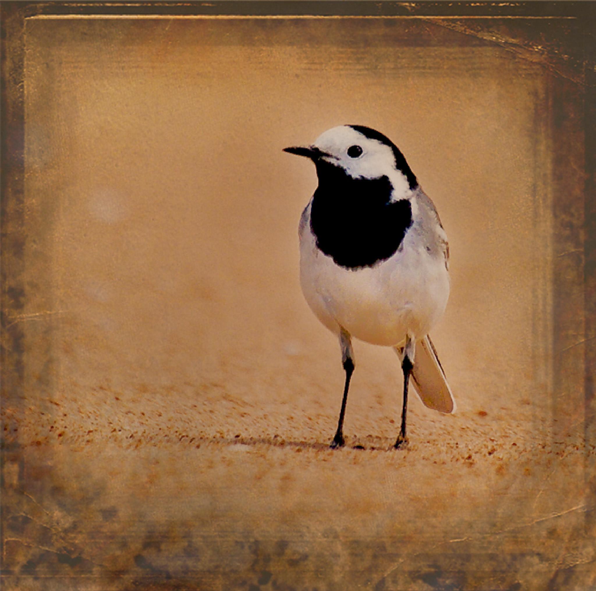 Bird on the beach by Peter Samuelsson