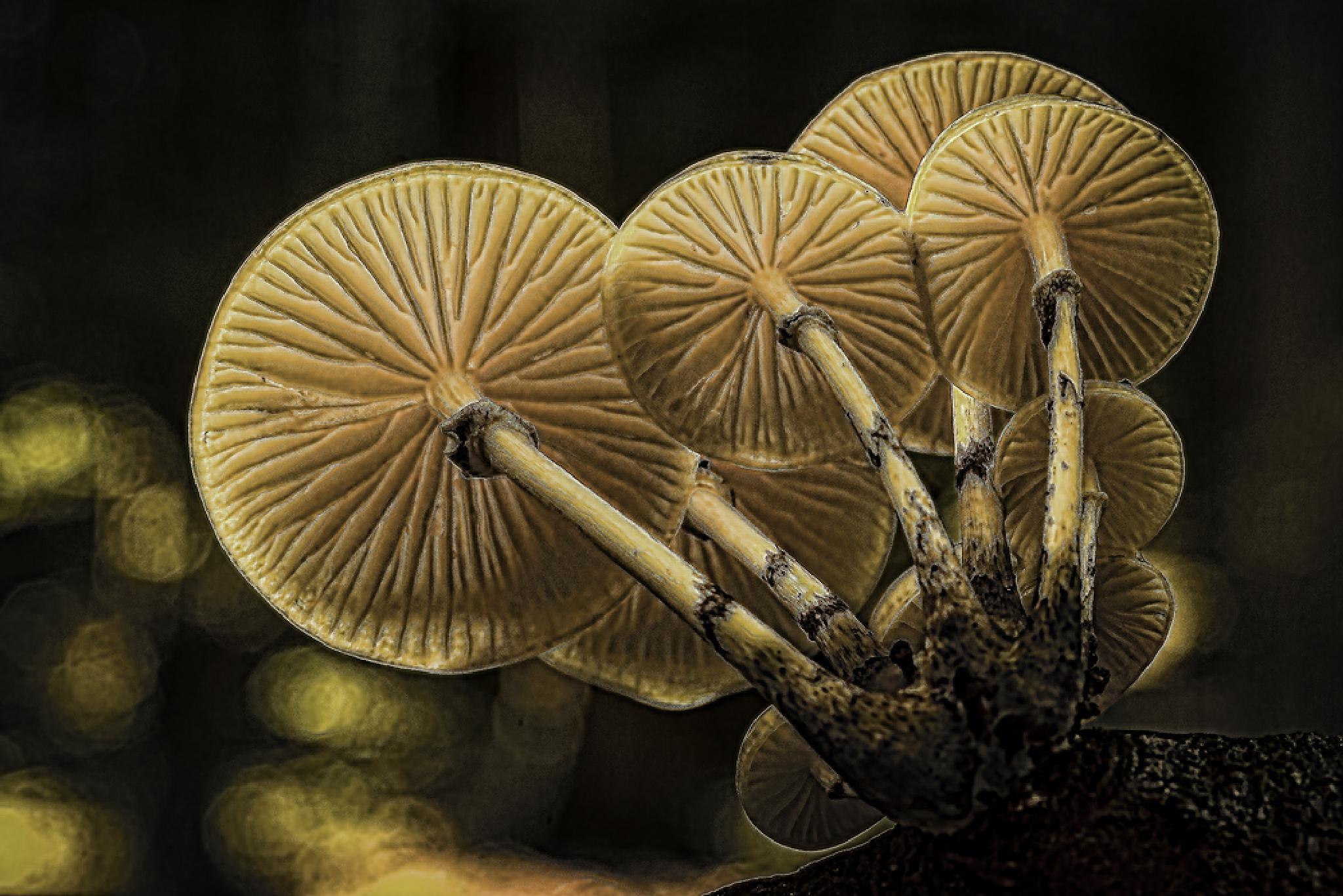 Fungimania by Peter Samuelsson