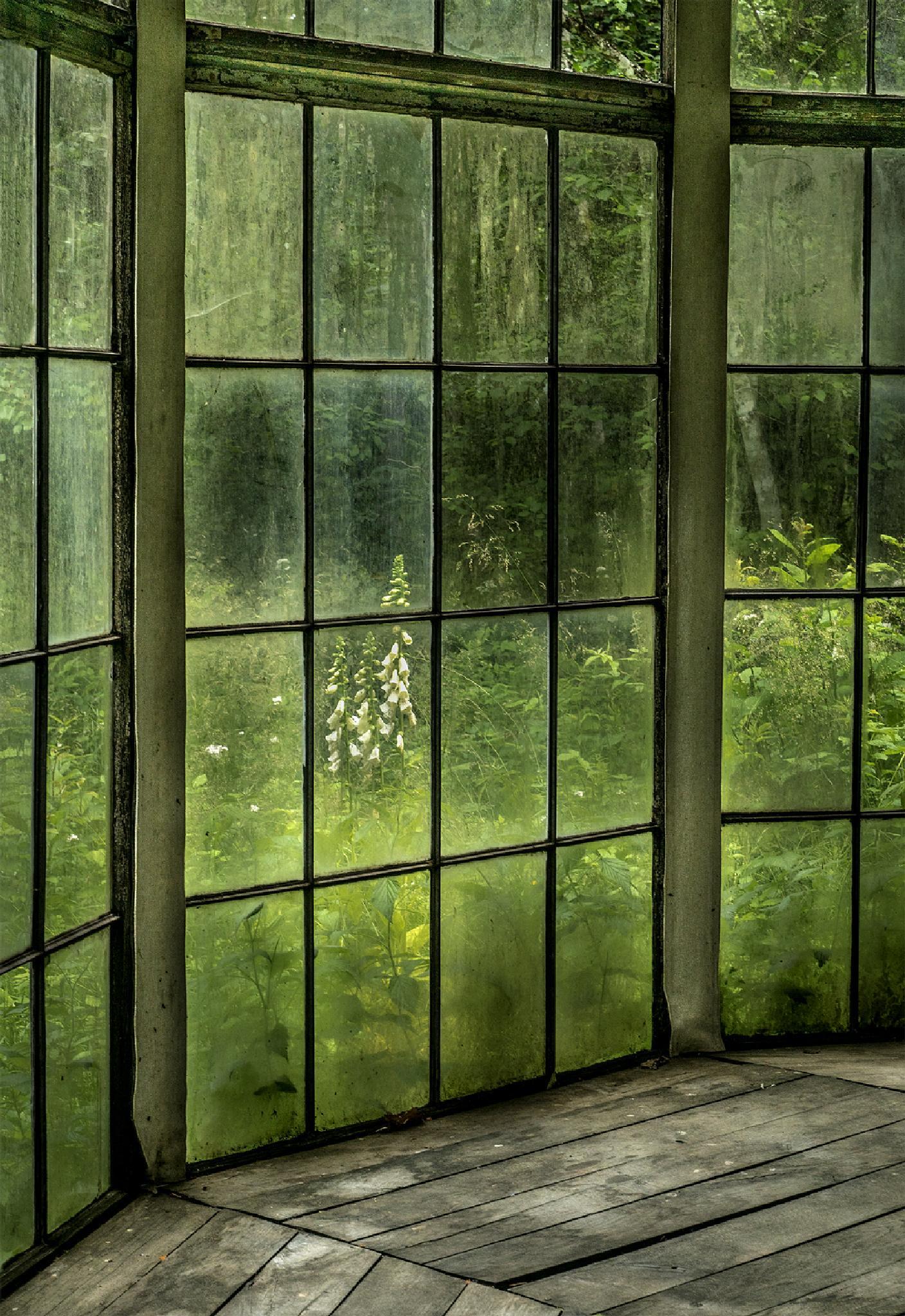 Photo in Nature #sweden #småland #gunillaberg #tage andersen #glasshouse #flower #nature