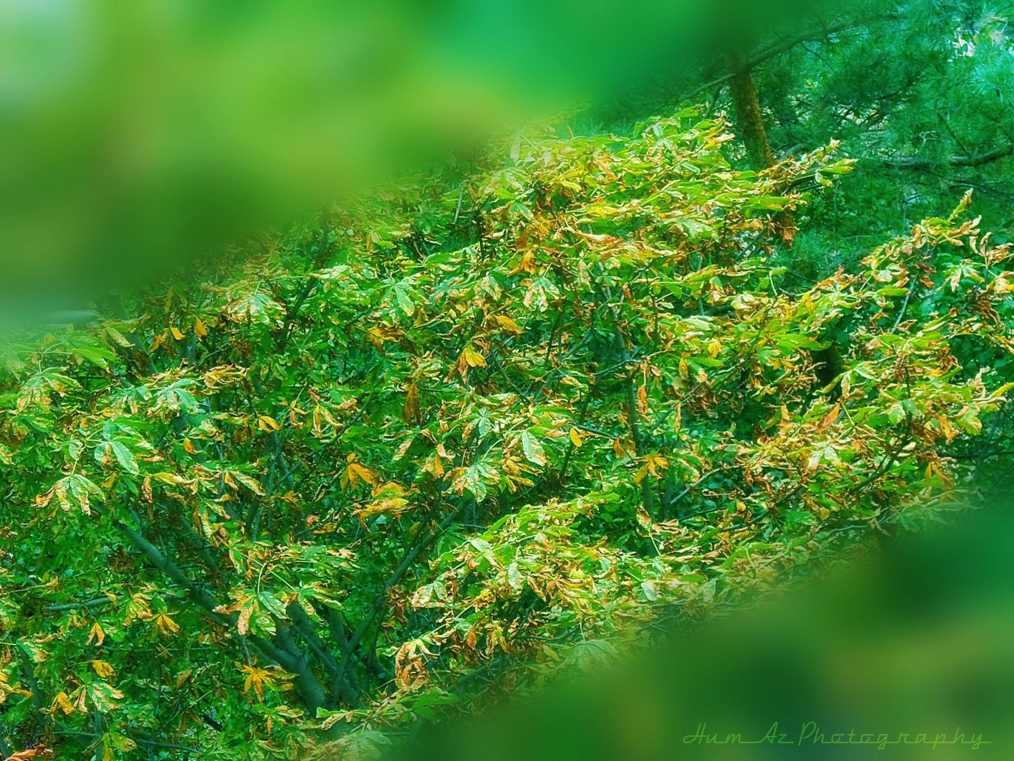 Lush  by Huma Azeem