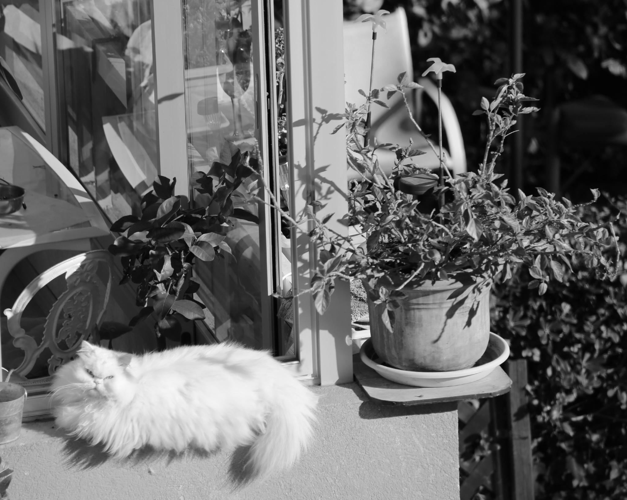 Cat Heaven by Cora