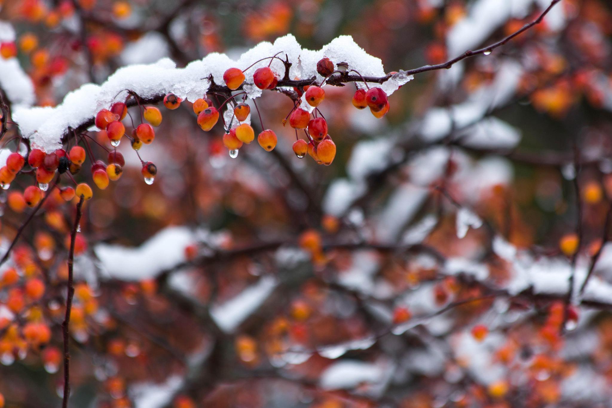 First Snow by Brian Scott