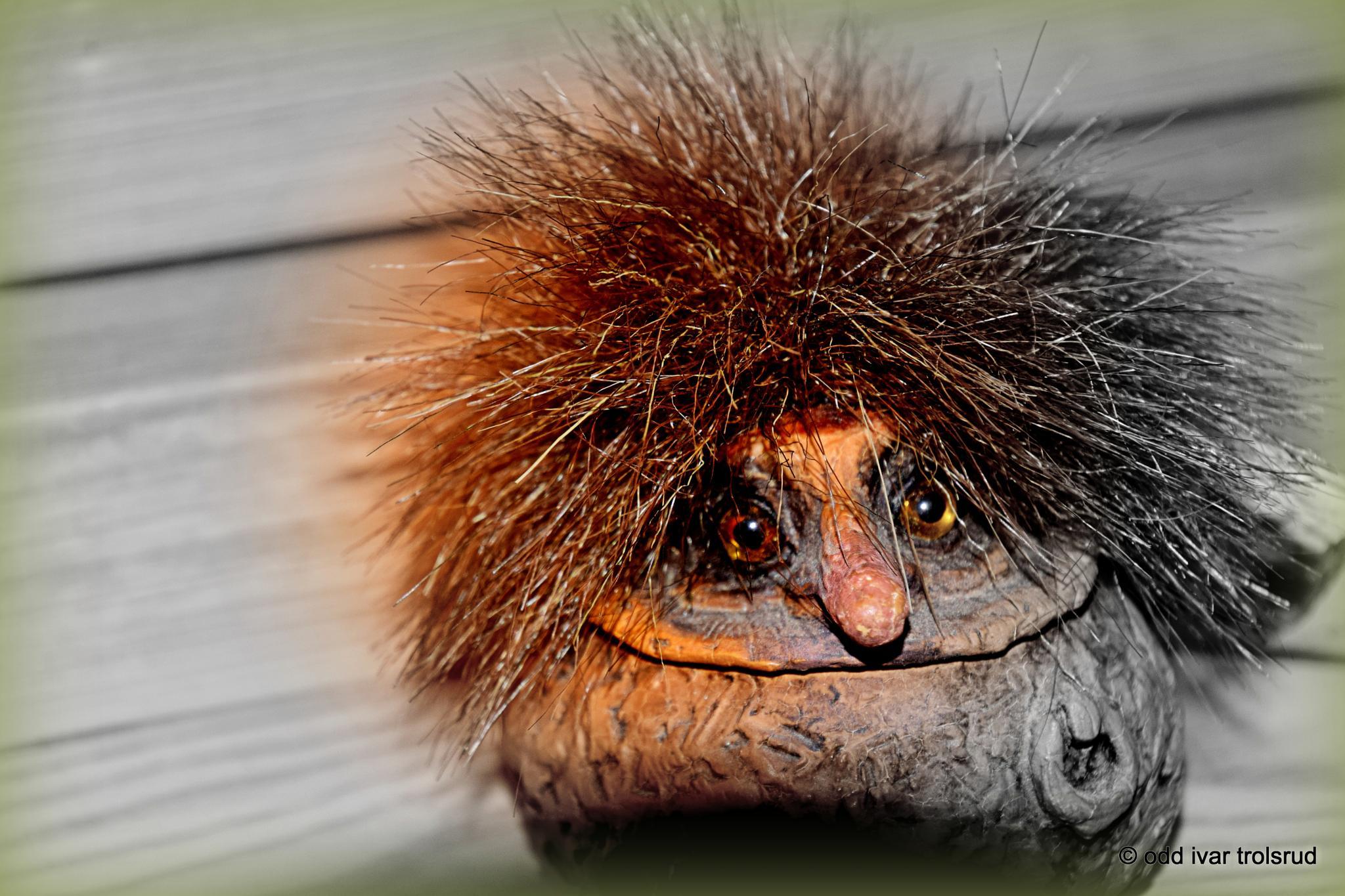 Norwegian Troll.... by trollet