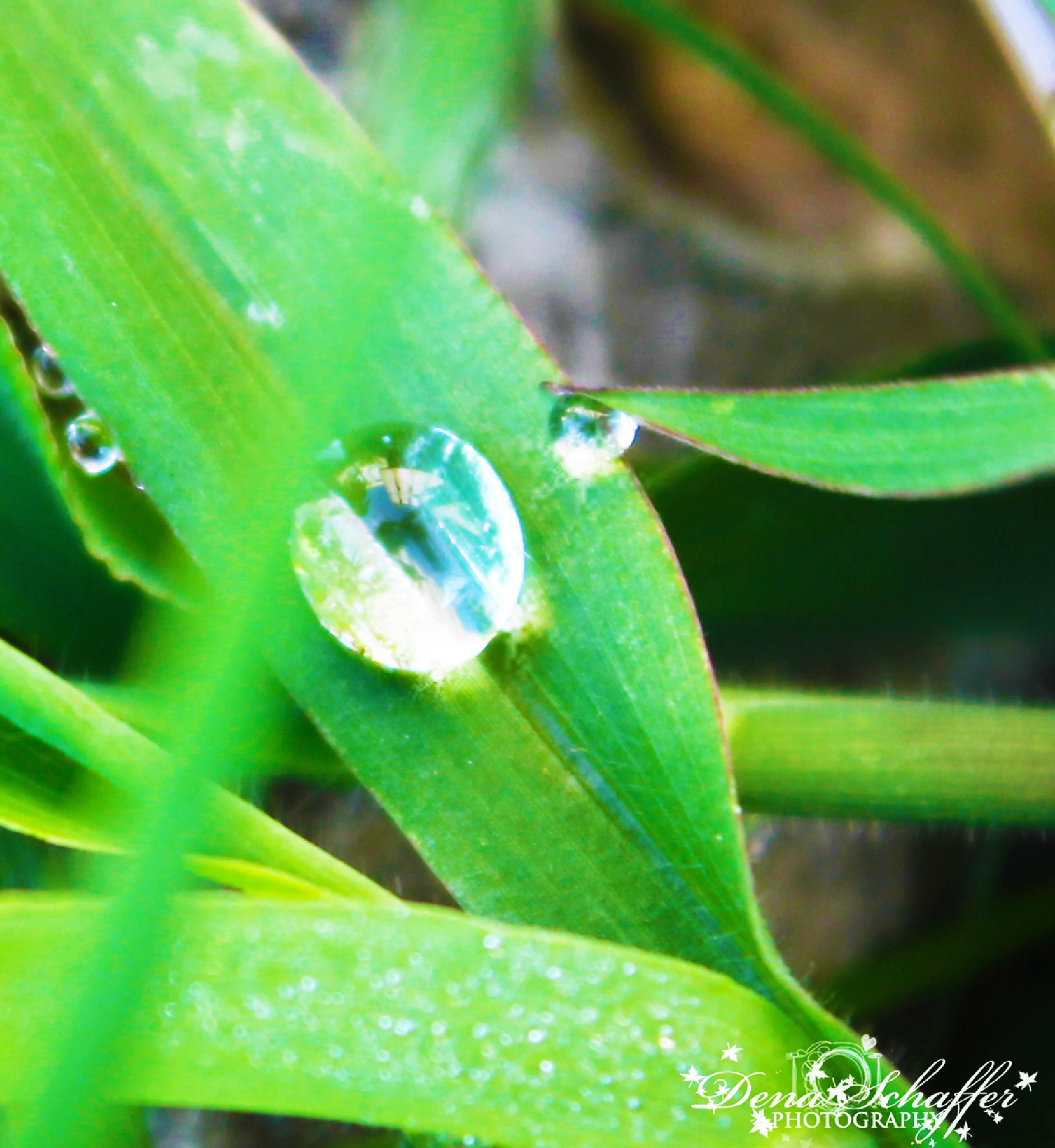 Droplets by denas41