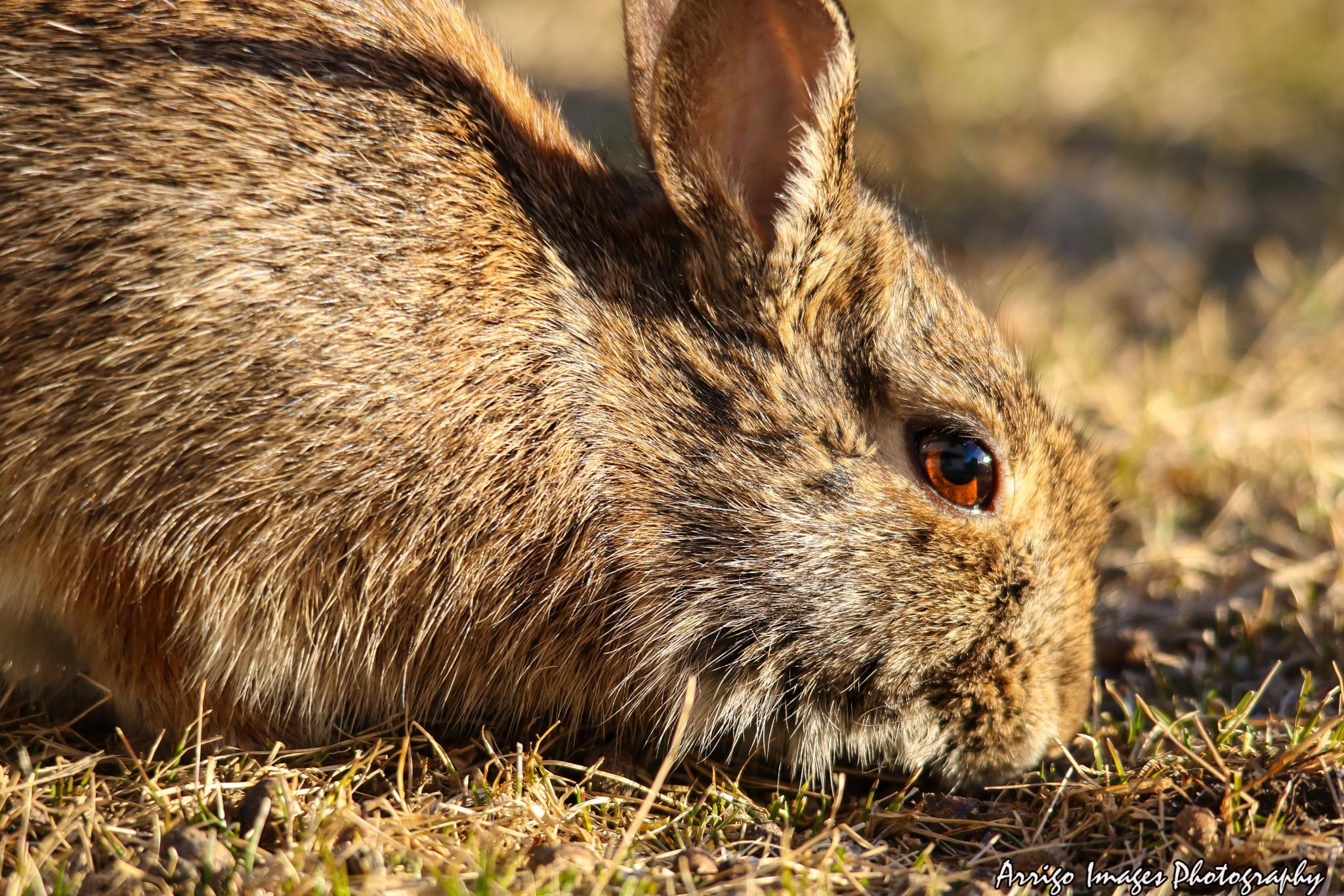 bunny by carmen.arrigo