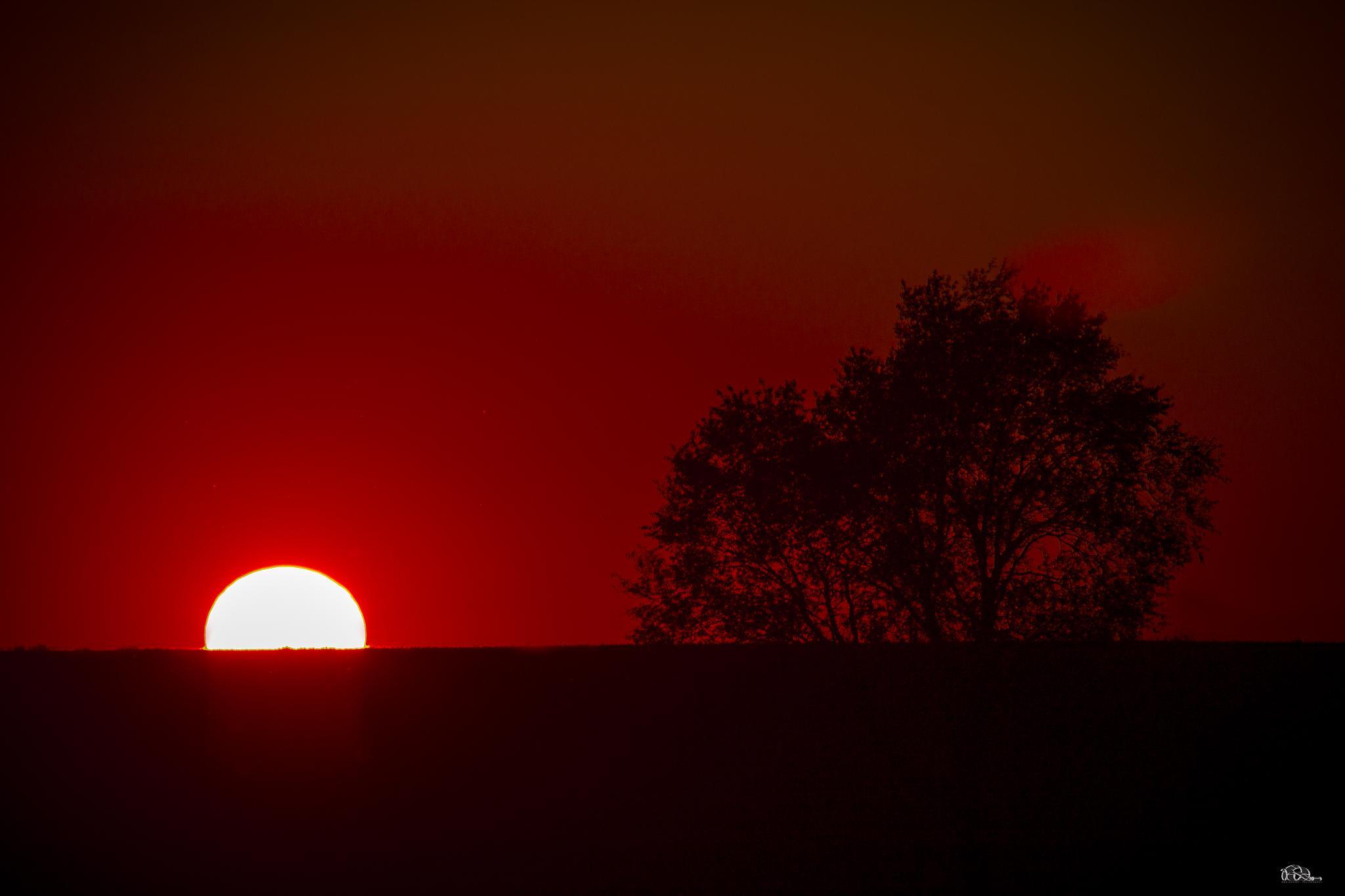 Sun tree by RWAlbrecht