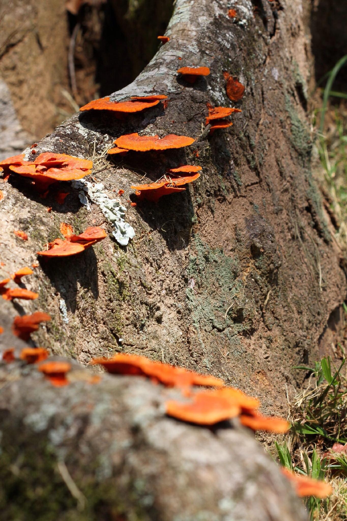 Mushrooms... by PedroPauloRipper