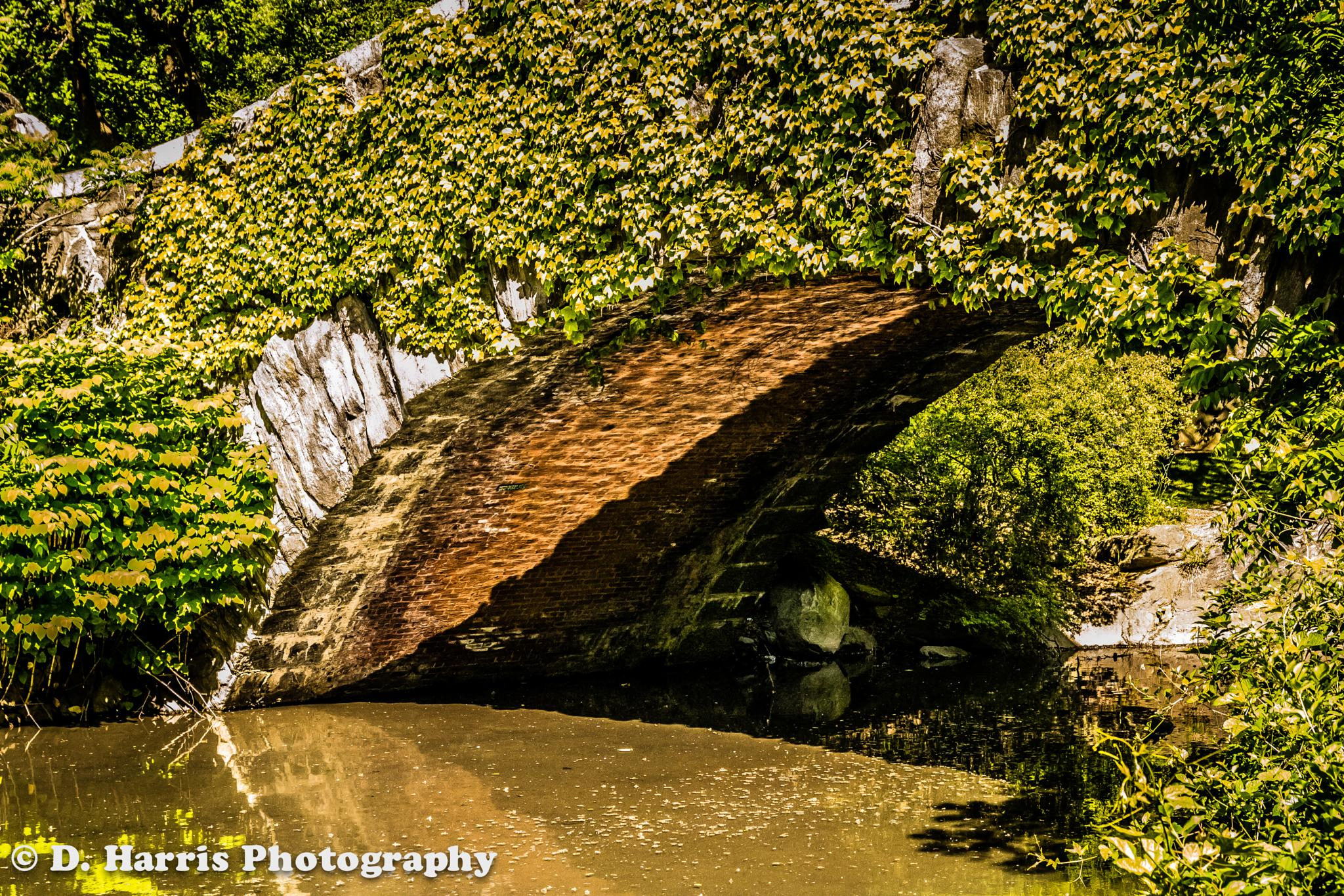 Bridge Over Troubled Waters (HDR) by Darryl Harris