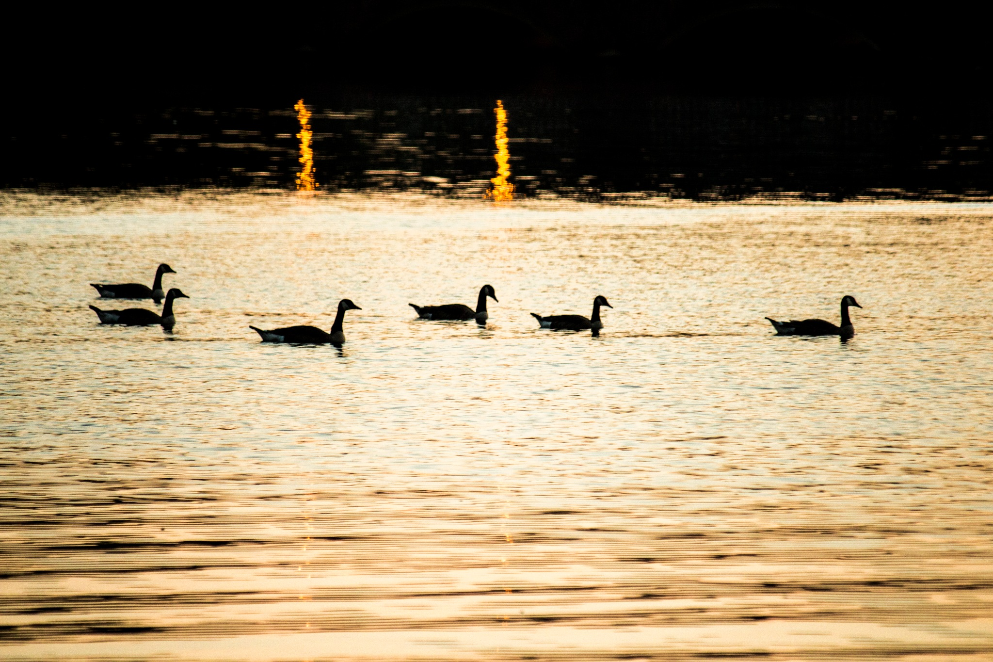 Geese at Sunset by Eric Richard Satter