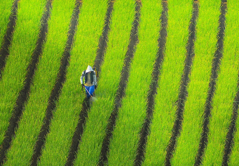 Man Between Lines by Pimpin Nagawan