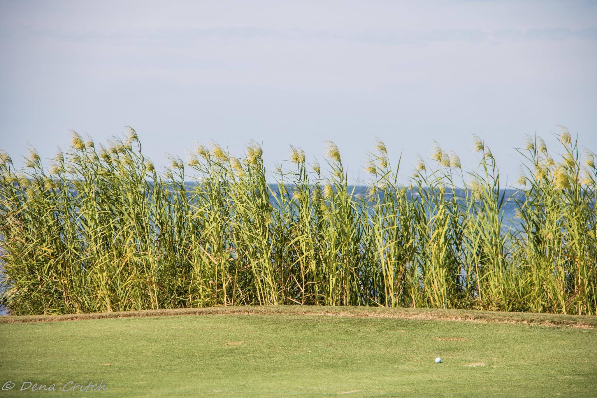 A 'Sea' of Grass by dena.critch