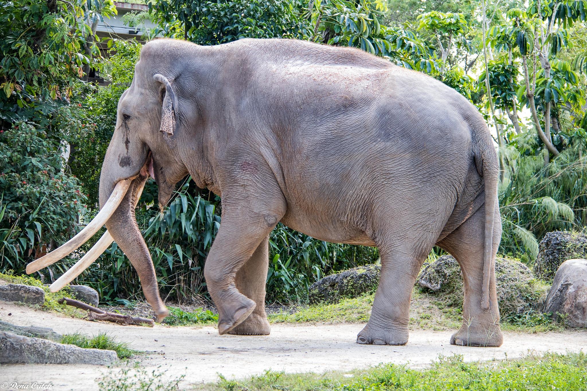 Mr. Elephant by dena.critch