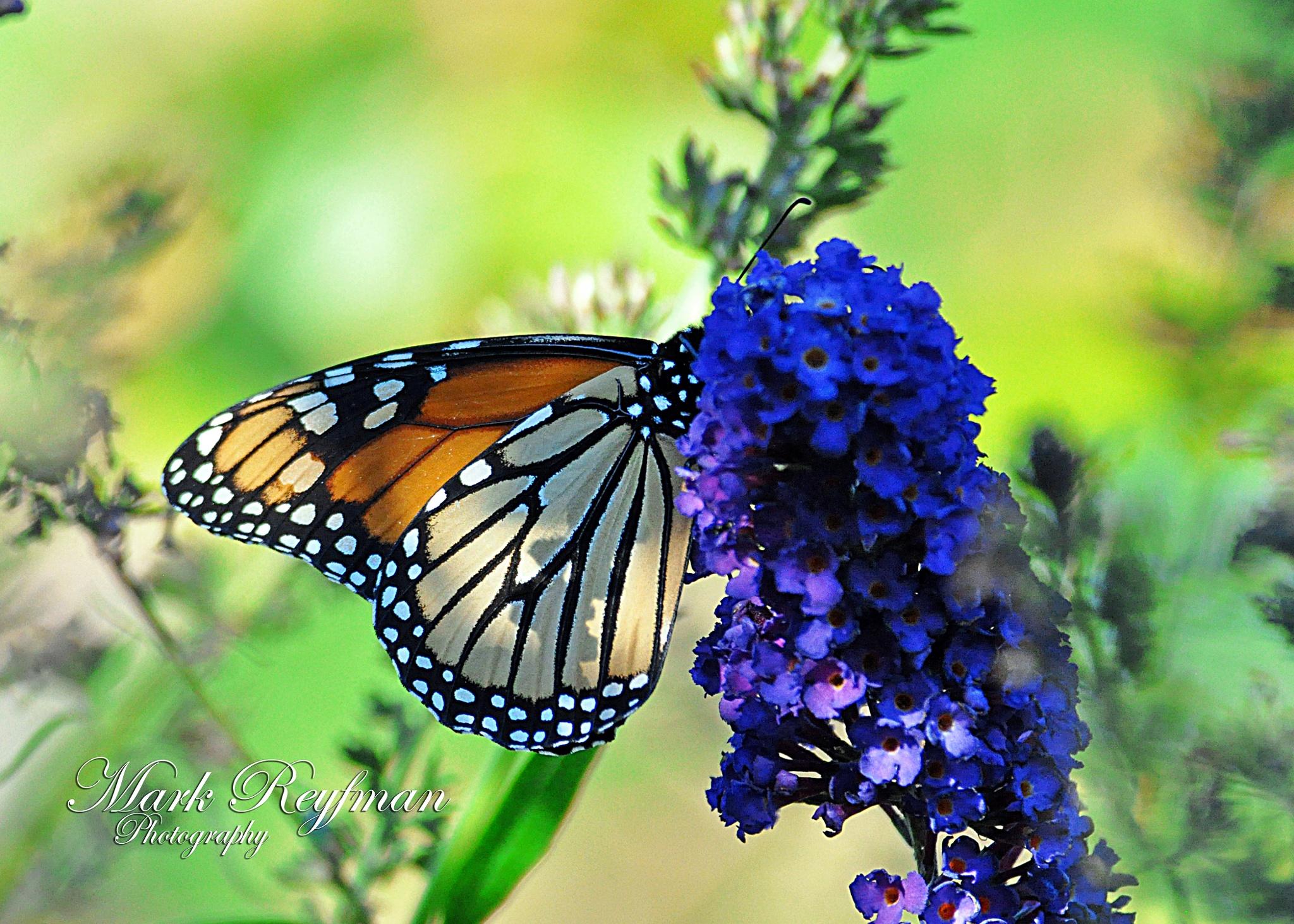 butterfly by marchik68