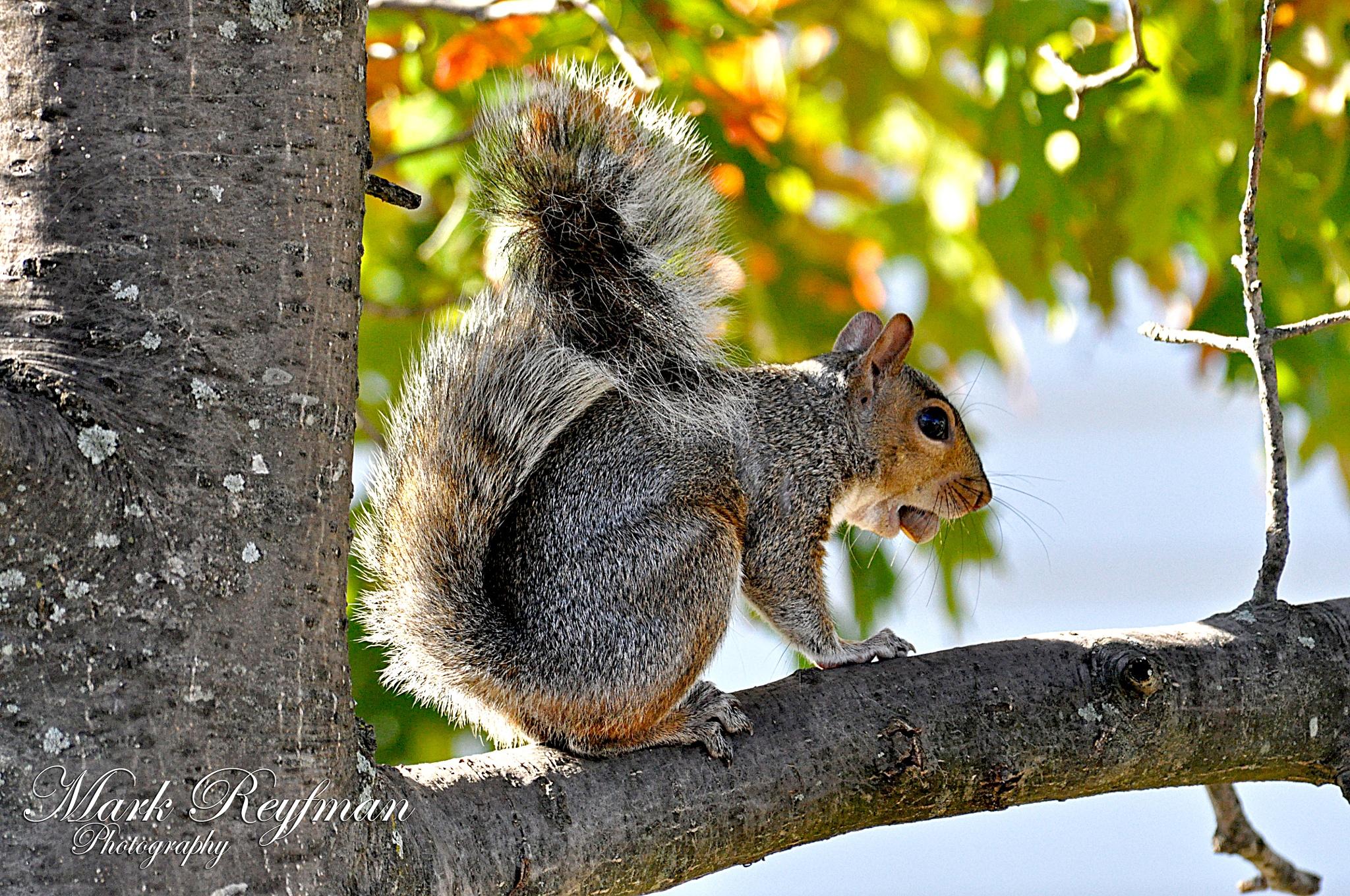 squirrel by marchik68