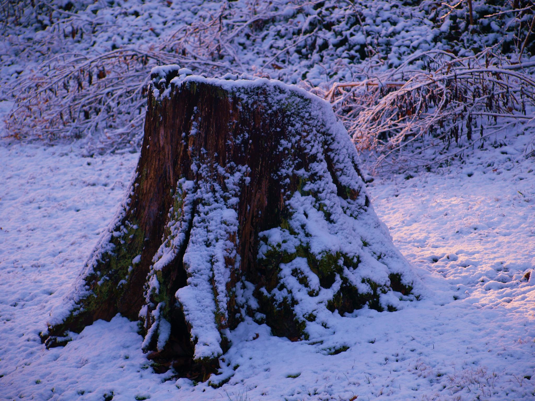 Tree Stump by MsAnaGNz
