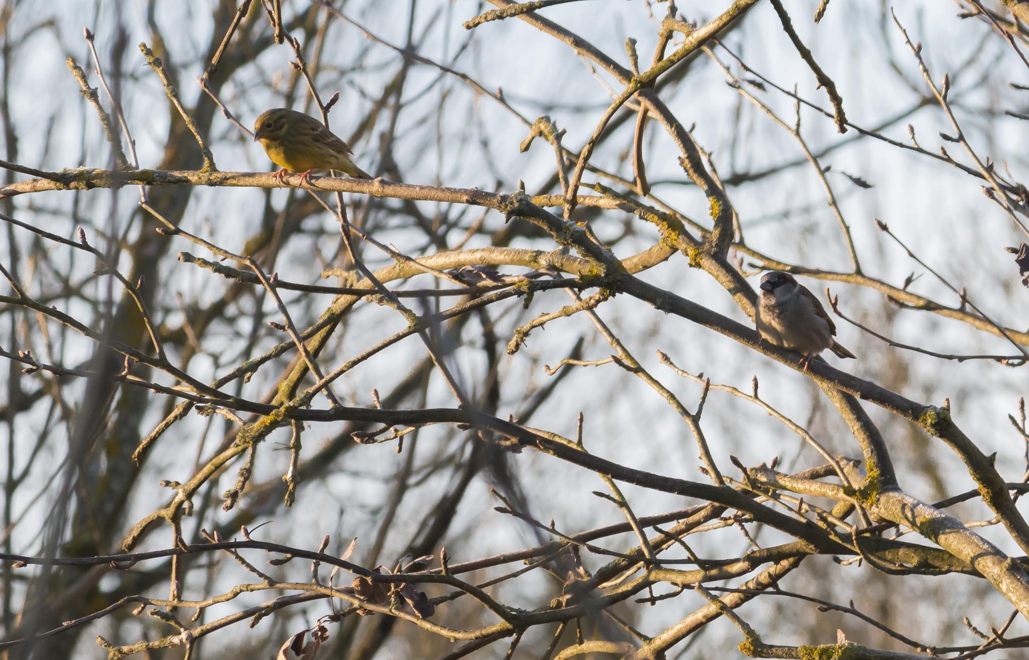 Tiny birds by Vanerpaddel