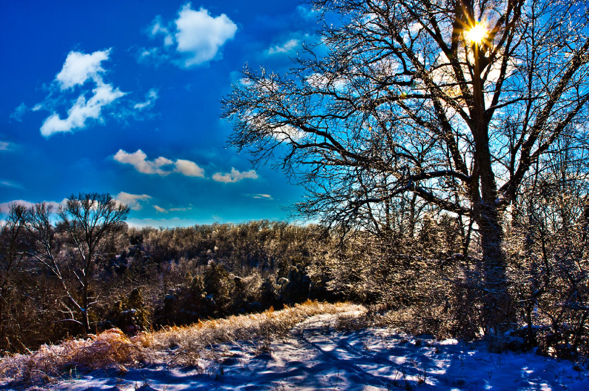Iced Trees and Sun by Gene Linzy