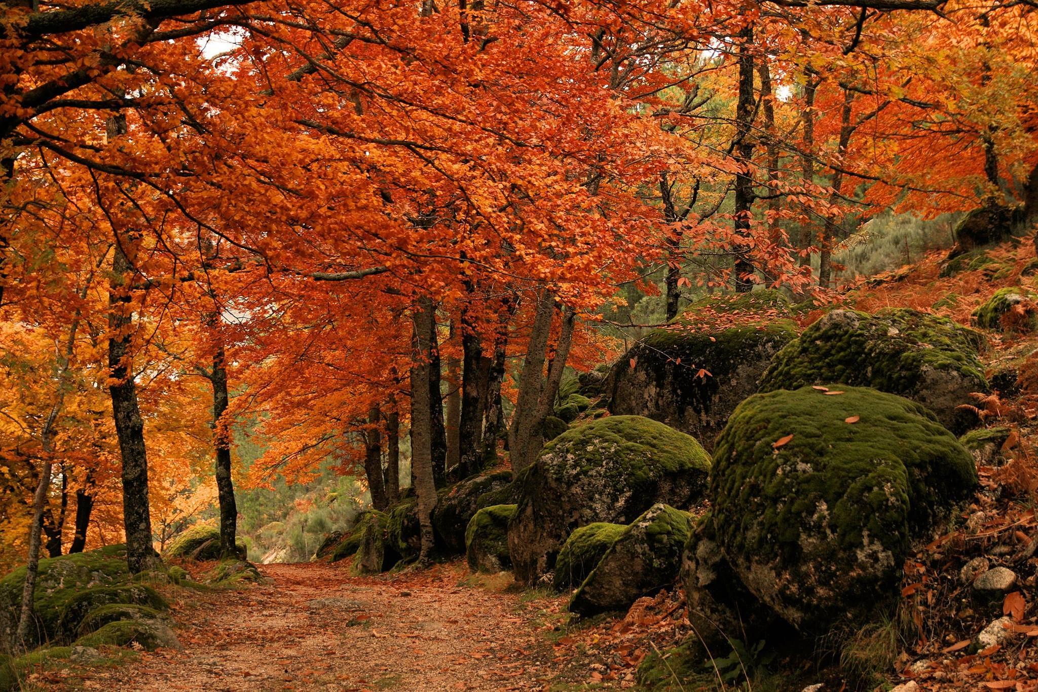 Outono na Serra da Estrela by Ed_von_Ems