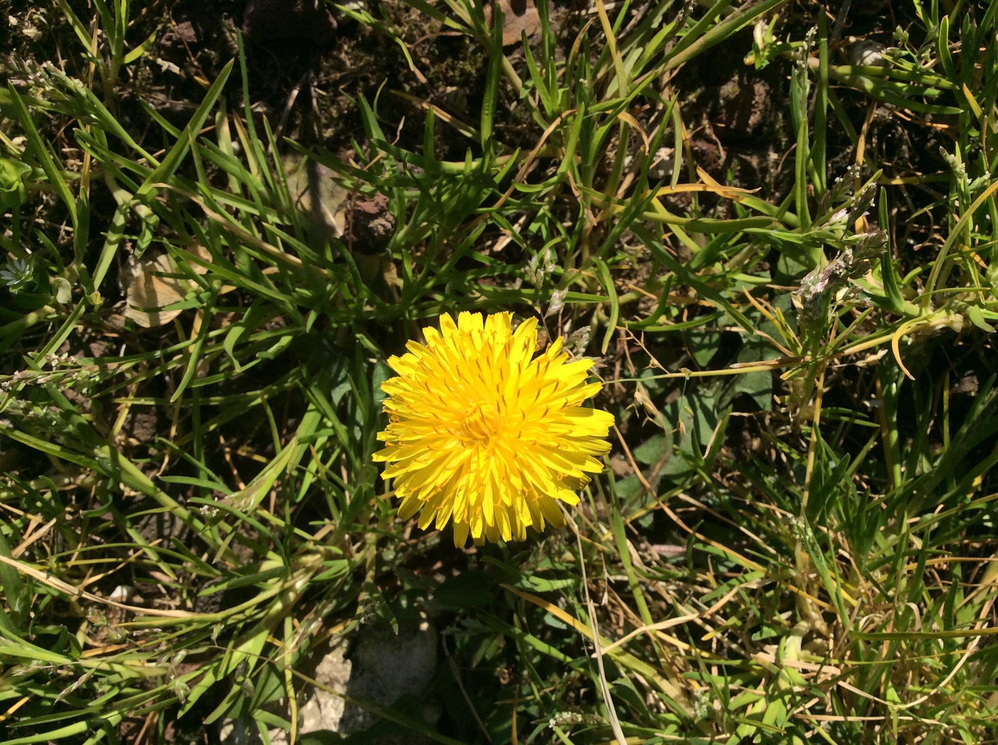My wild flower Today, 12/03/2015 by johnny.kariono