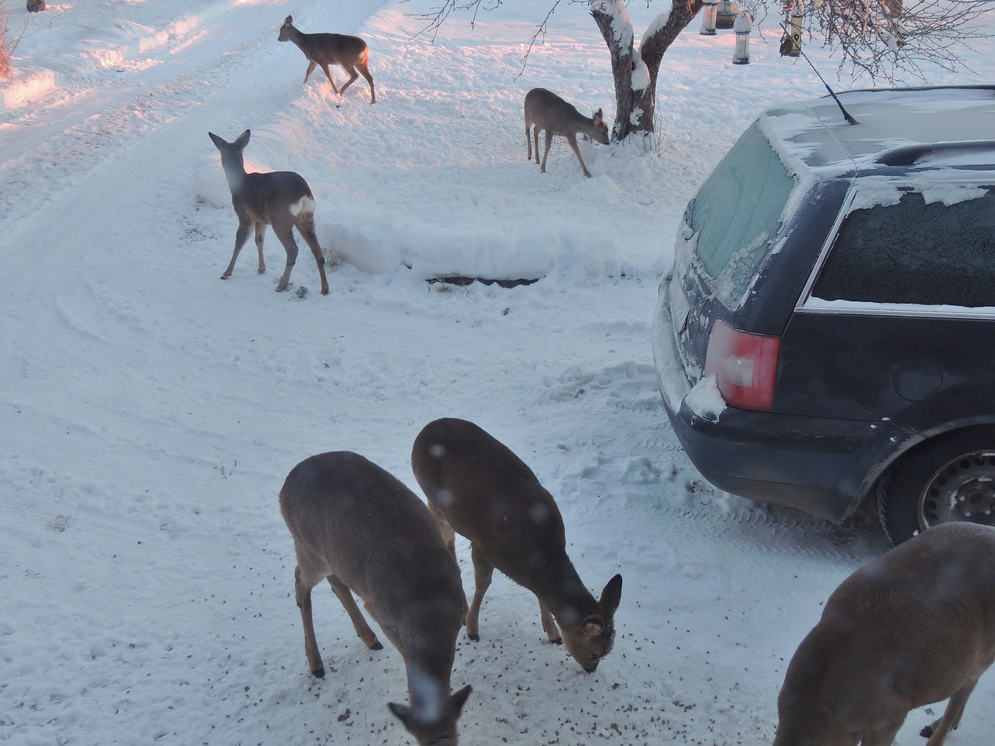 Today outside my house ..... by Anders Pettersson