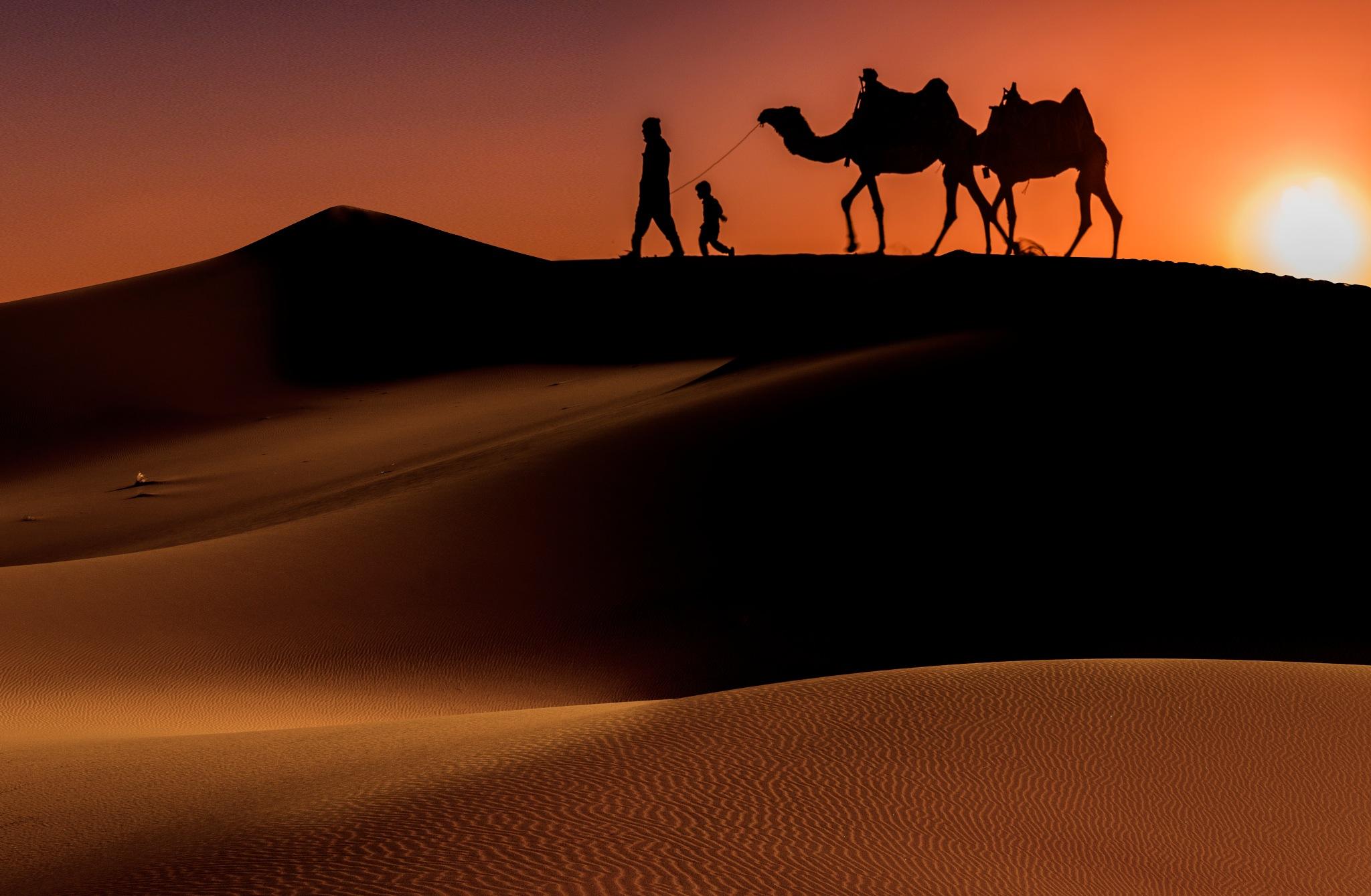 Desert life by Shahriar Dabiri