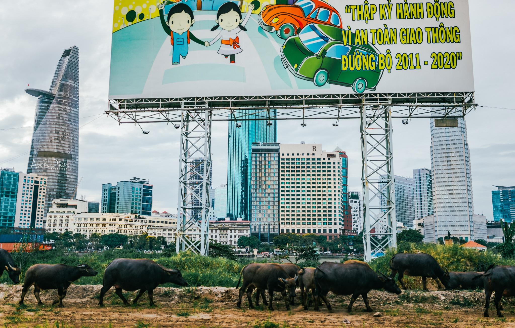 somewhere in my city by Alex Pham