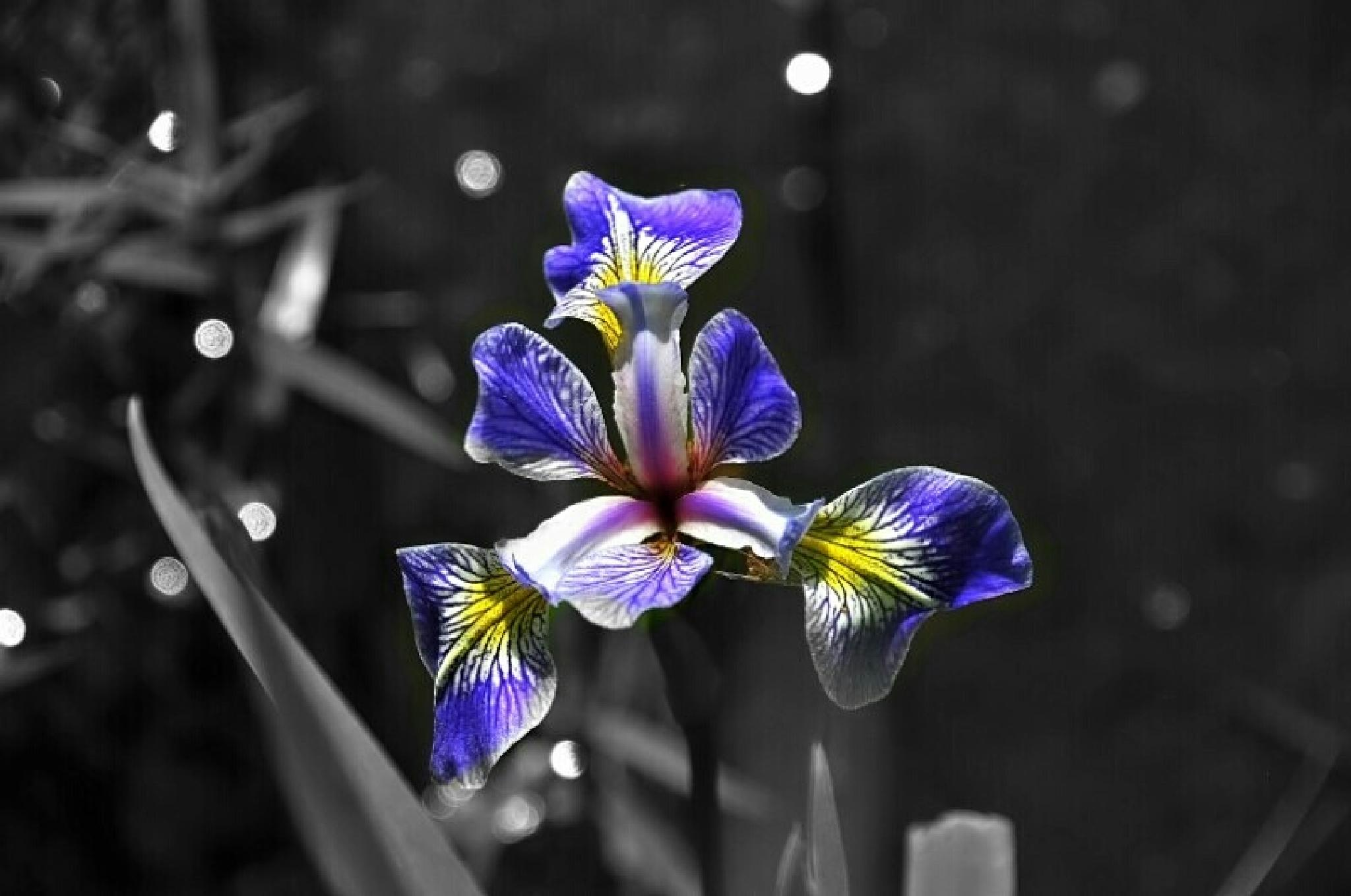 Photo in Nature #flowers black  and white