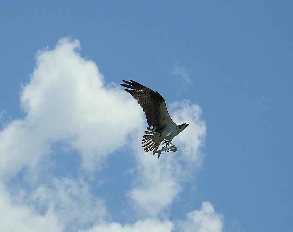 In Flight by pagstar