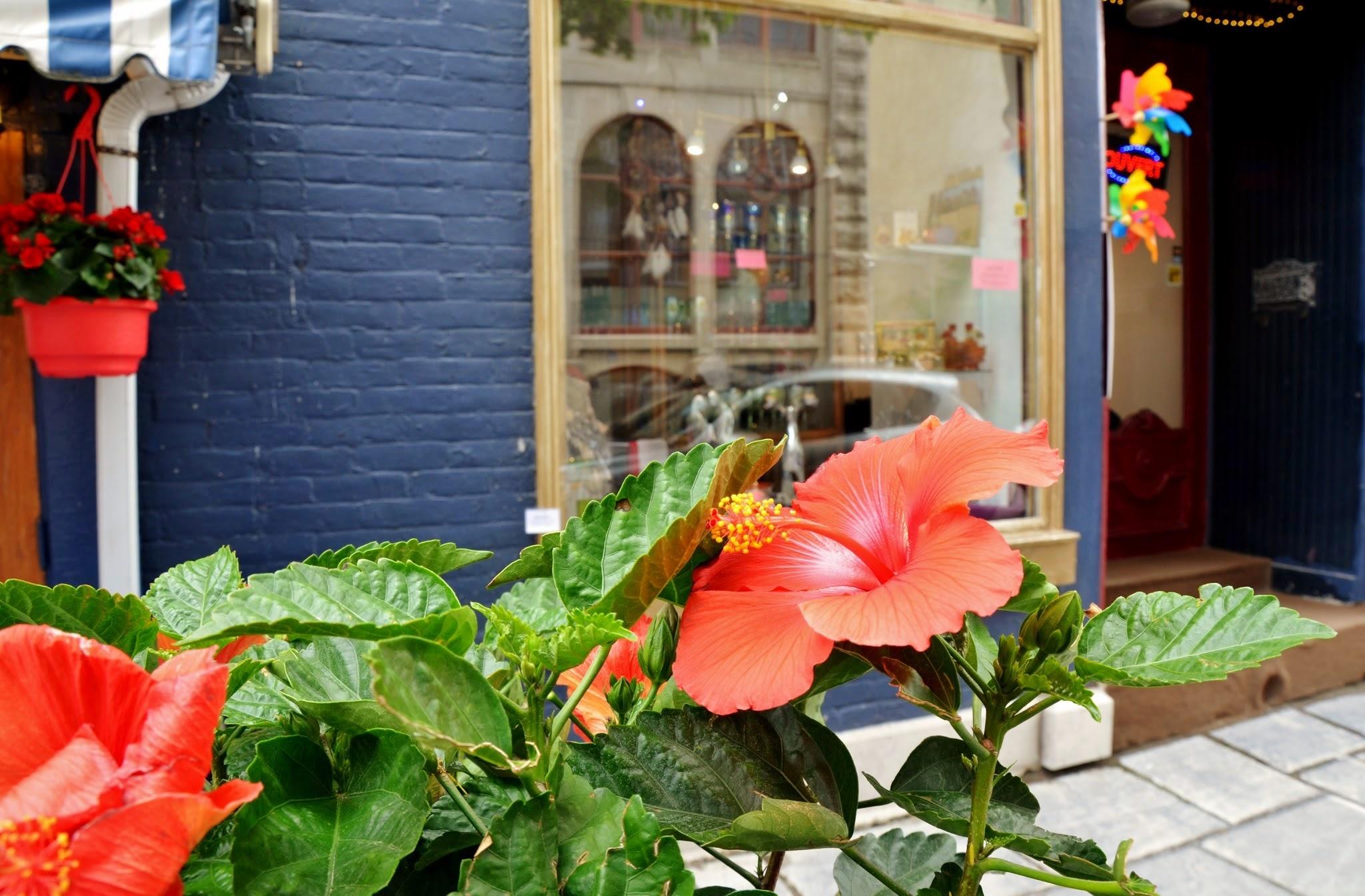 Hibiscus resplandissant de bonheur by real.michaud.5036