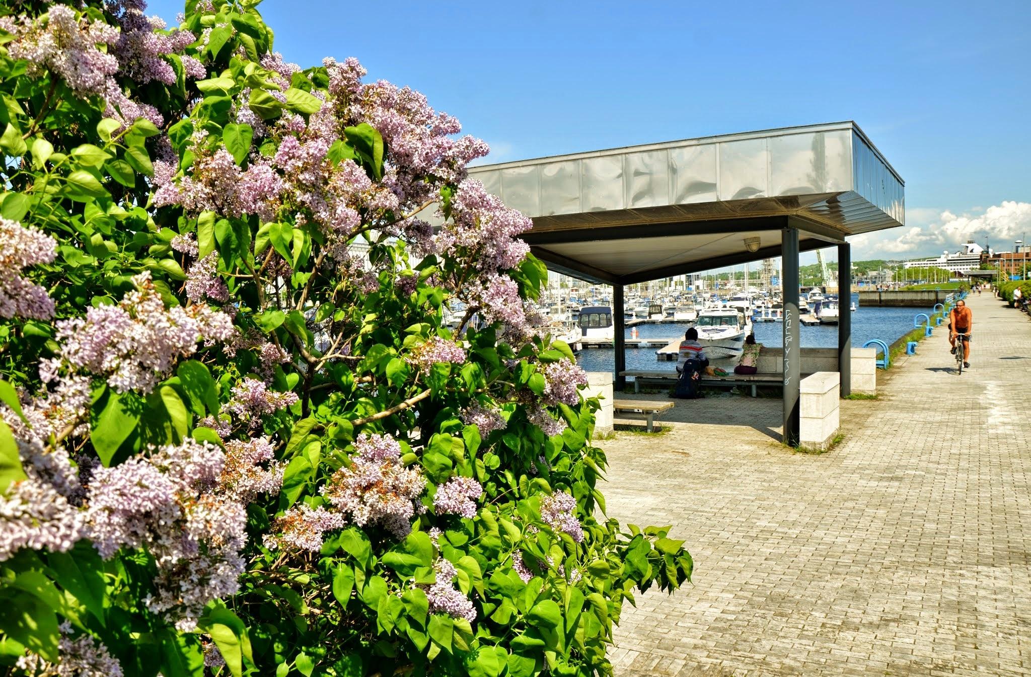 Lilas et marina font mon printemps by real.michaud.5036